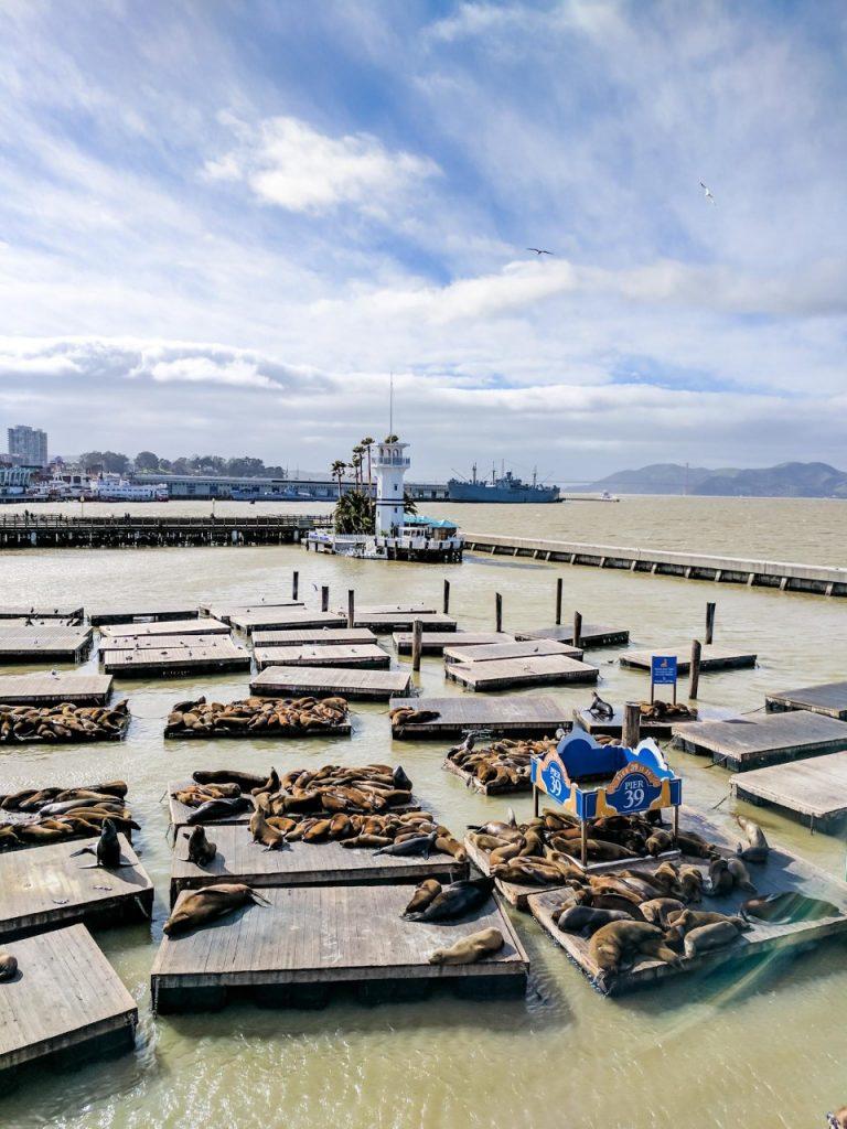 Fisherman's Wharf, Pier 39 Sealions San Francisco