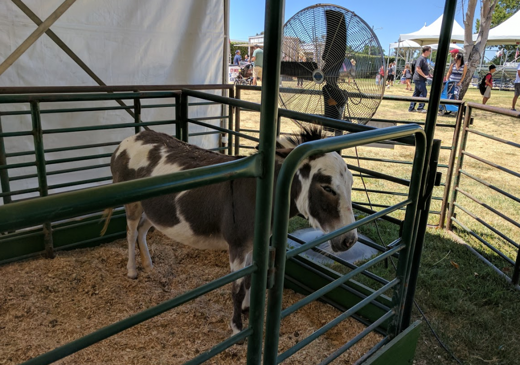 county-fair-donkey