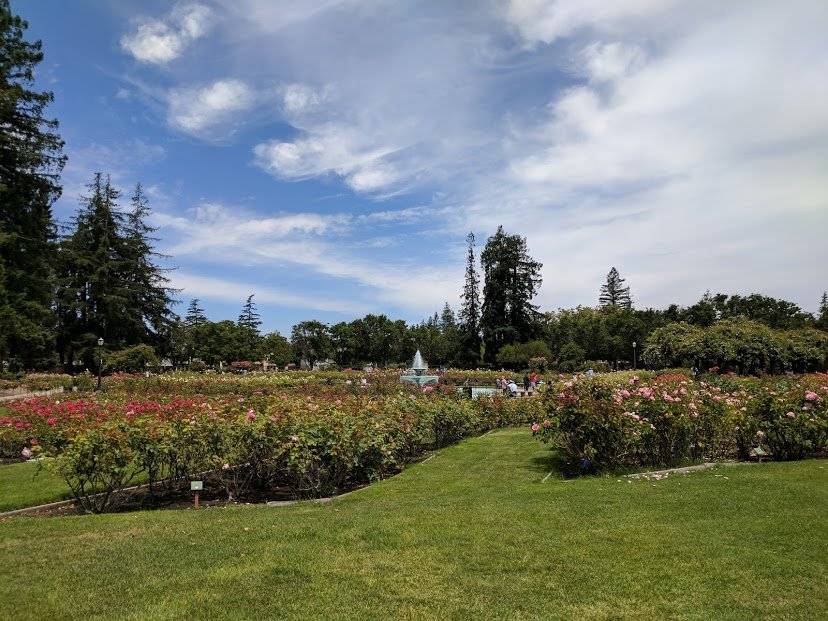 San-jose-rose-garden