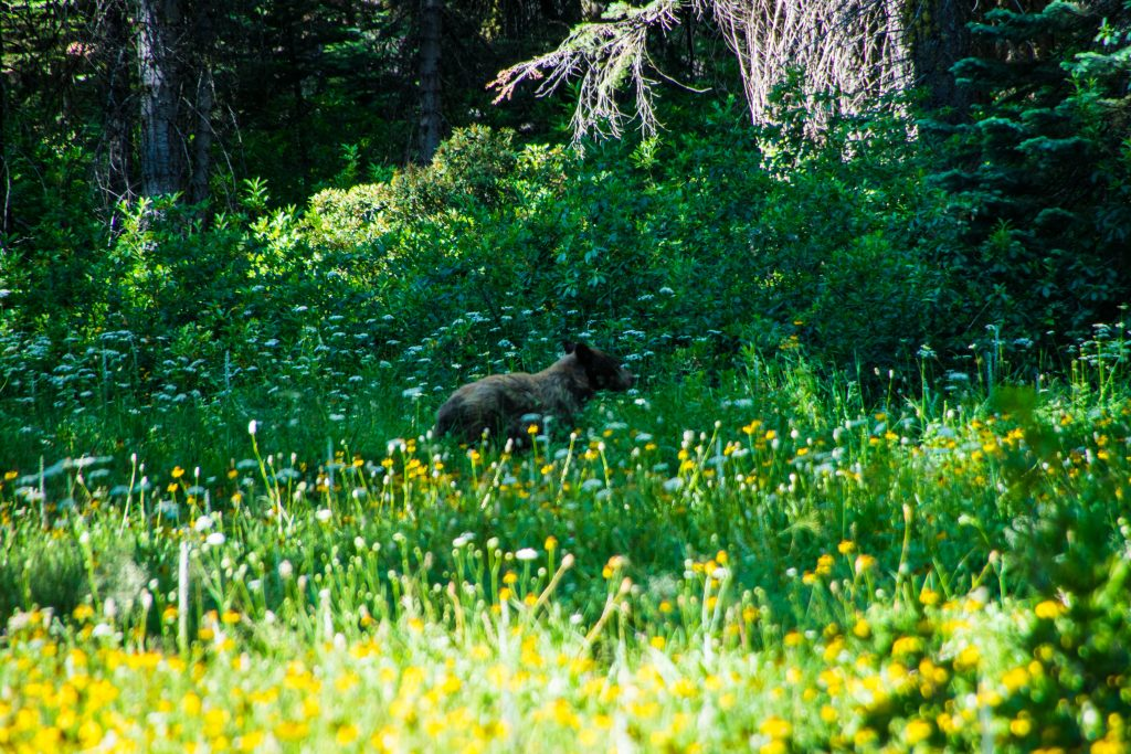 Two days in Yosemite, bear