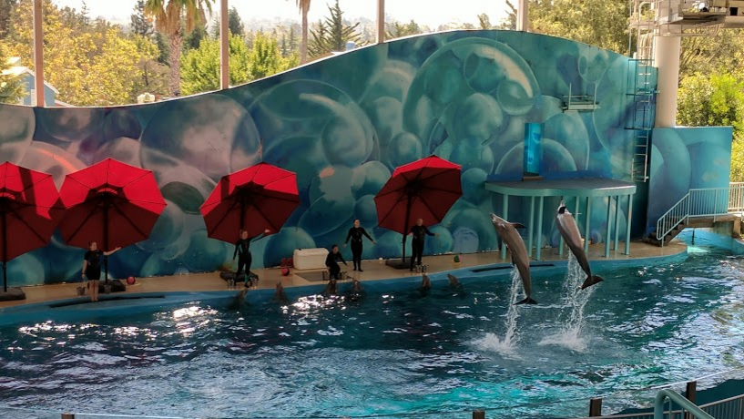Six Flags Discovery Kingdom Dolphins