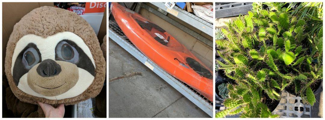 kayaks-cactii-bears