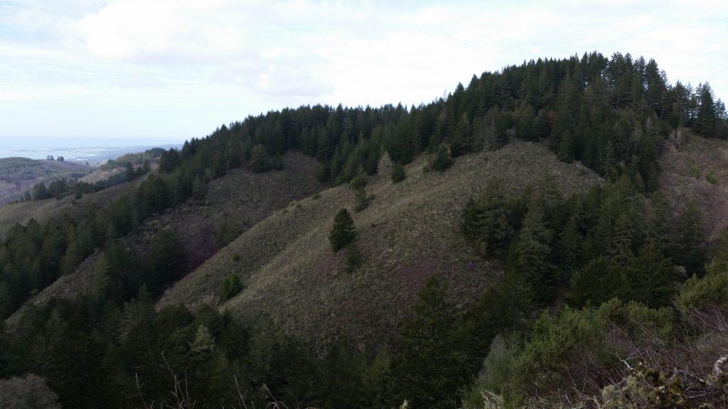 Hiking Purisima Creek Trail was an experience