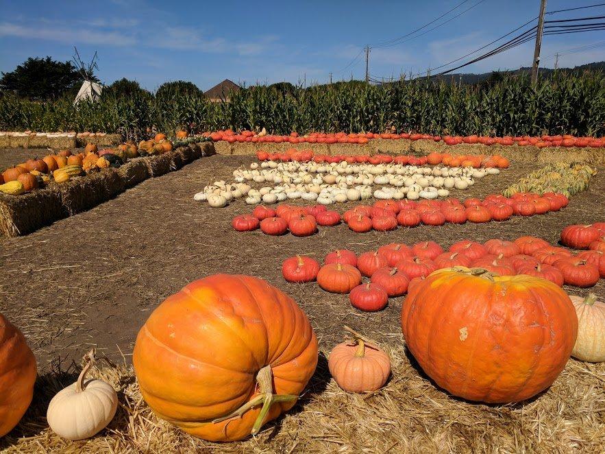 The Pumpkin in the Pumpkin spice