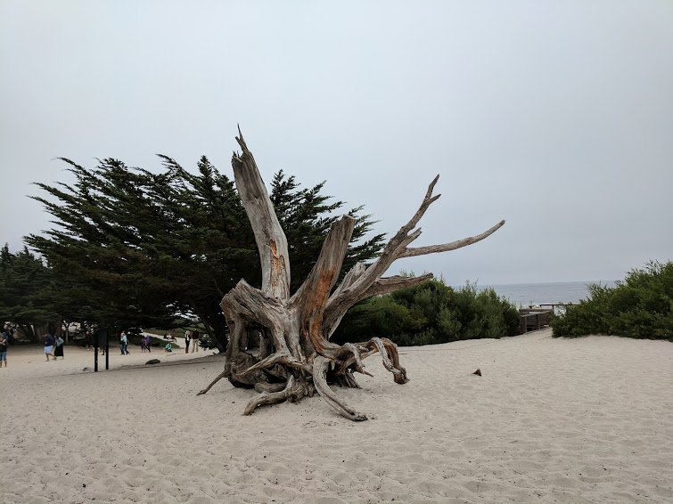Carmel-by-the-Sea-north-dunes