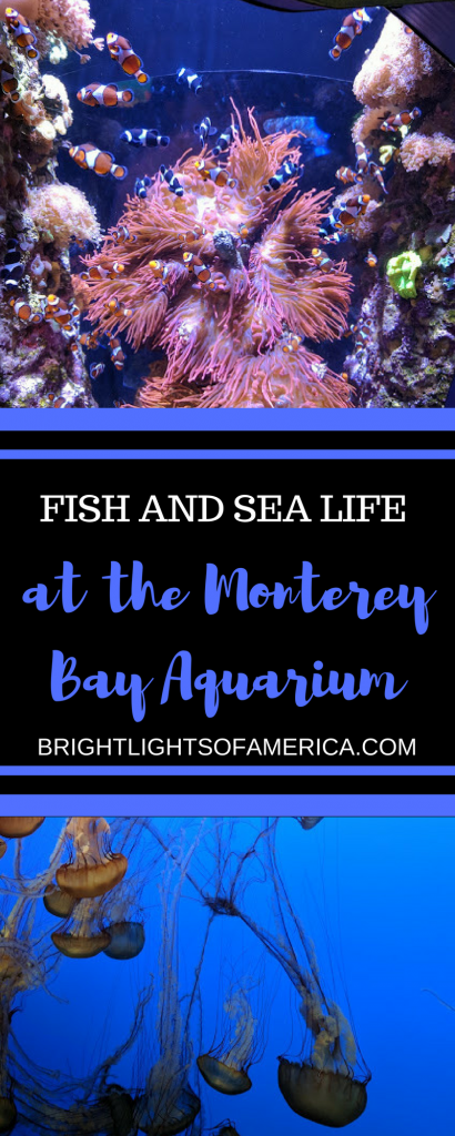 Monterey Bay Aquarium | Monterey | California | California Road Trip | Aquarium | Sea Otters | Jellyfish | Aussie | Expat | Aussie Expat in US | expat life