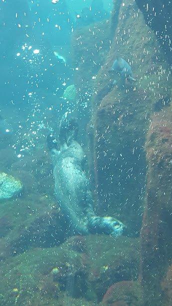 Monterey Bay Aquarium Sea Otters