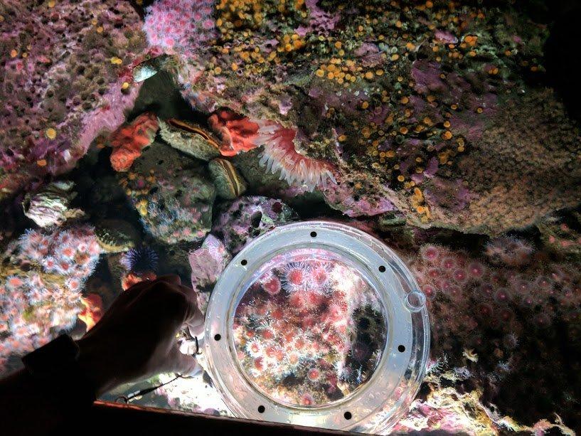 Coral at the Monterey Bay Aquarium