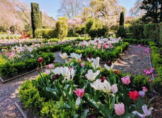 Flowers in the garden of Filoli, San Francisco