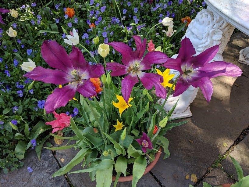 Filoli Flowers