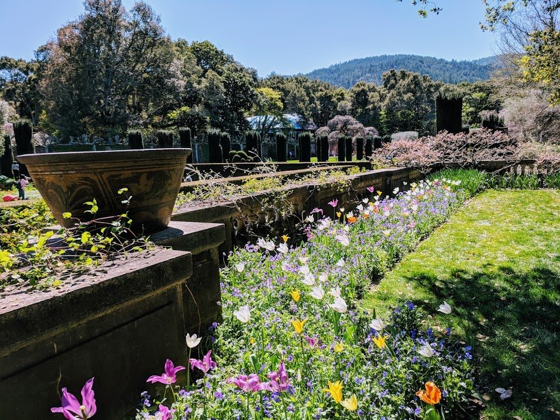 Flowers blooming at Filoli