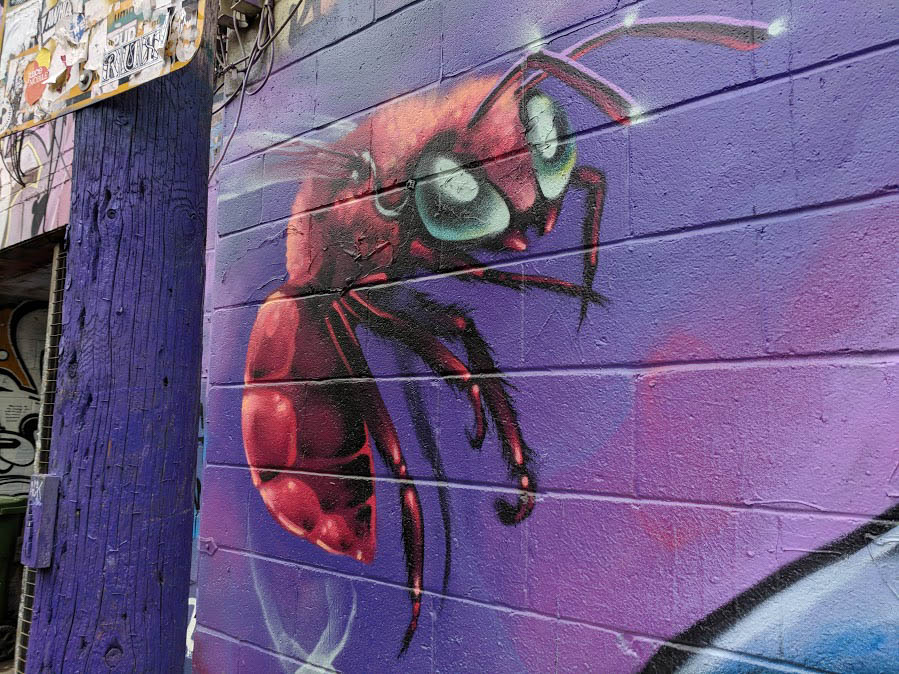 Toronto Street Art ant