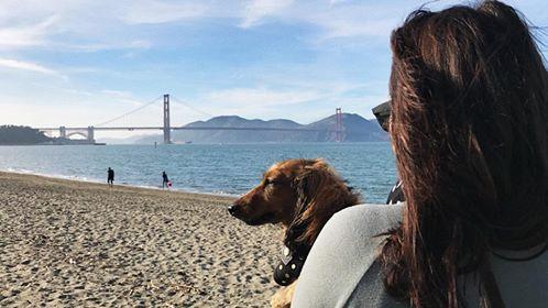 Daschund at the Golden Gate Bridge