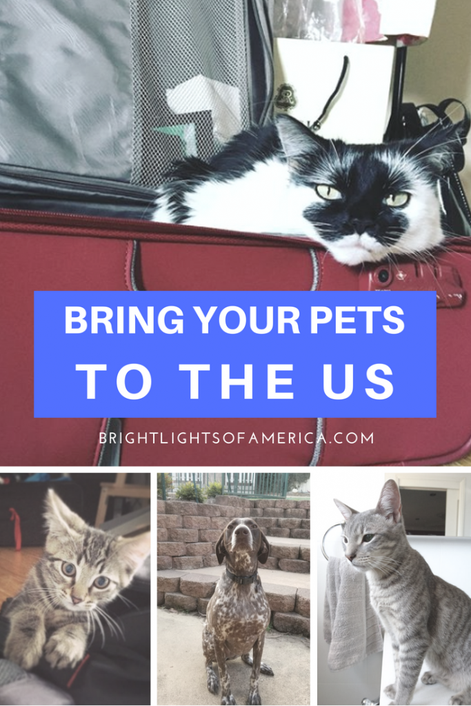 Wondering how to move your family pets with you into the US? Here's some expat stories as well as some facts and tips.