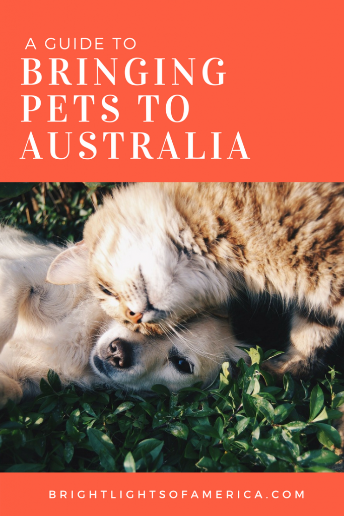 Thinking of bringing a #dog or #cat into #Australia from the US? Here are all the #quarantine rules and processes you have to follow first.
