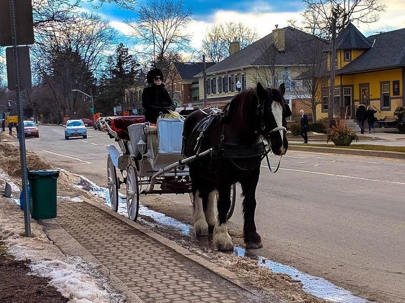 A horse in Niagara-on-the-Lake
