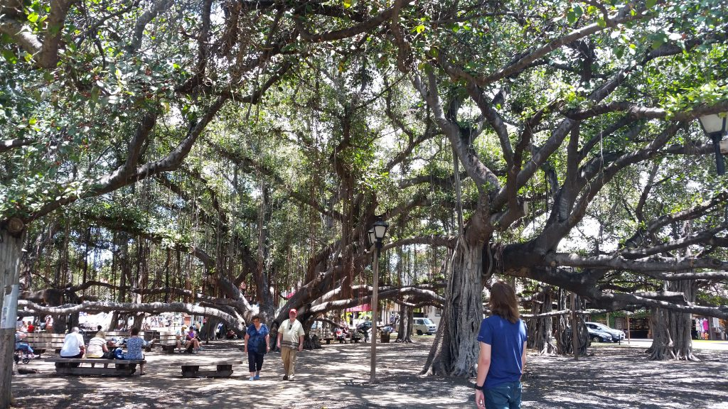 The Banyan Tree in Lahaina