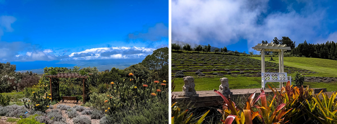 The Ali'i Kula Lavender Farm