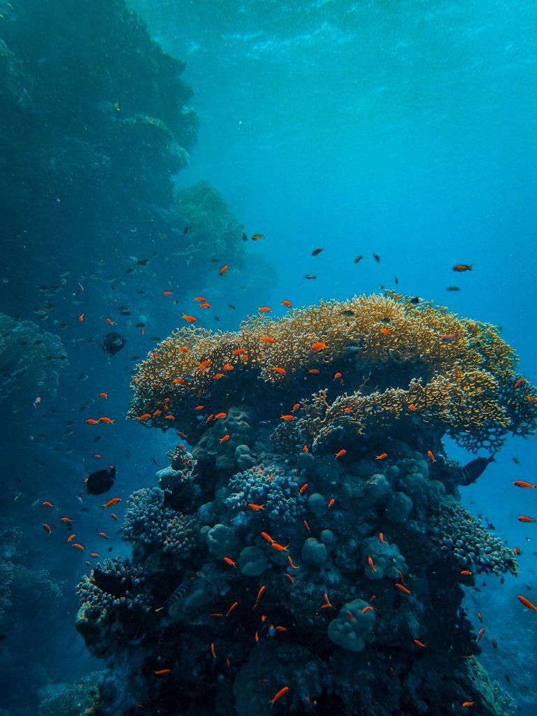 Snorkeling in Maui, Hawaii