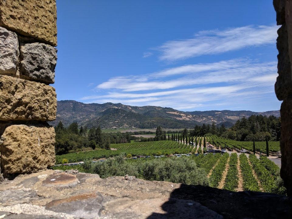The vineyards surrounding Castello di Amorosa