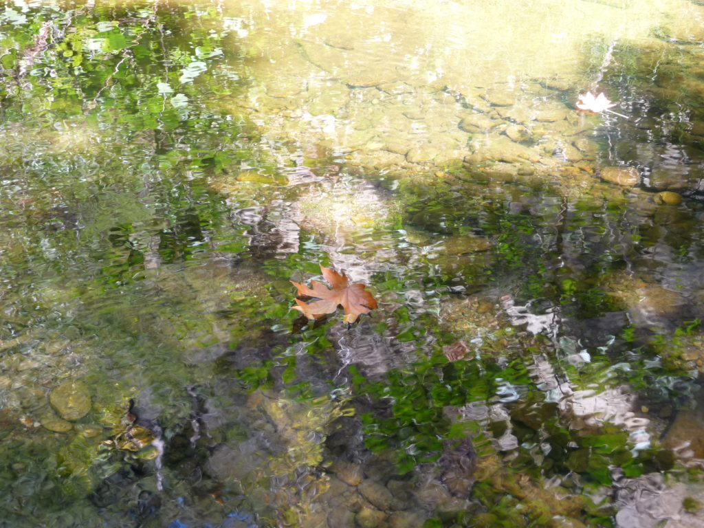 Leaf floating in a stream