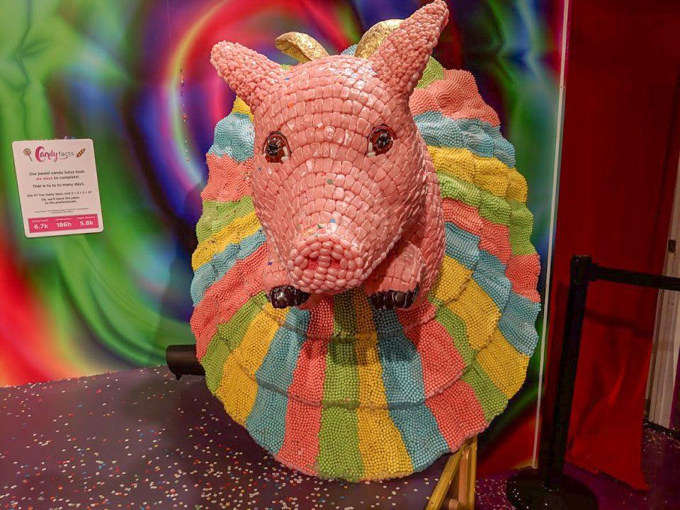 Ballernia pig