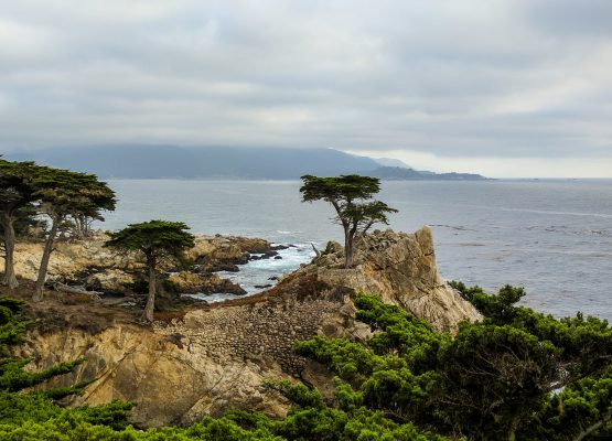 17 Mile Drive Monterey in pictures (with maps)
