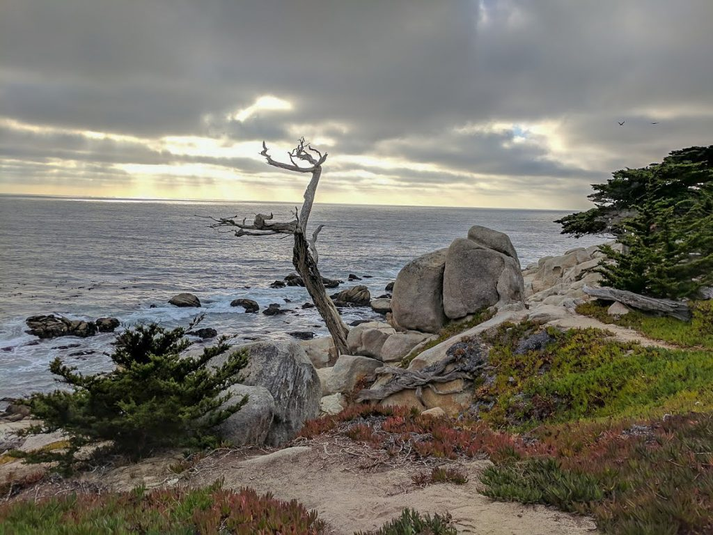 Ghost Trees at Pescadero Point on 17 Mile Drive, California