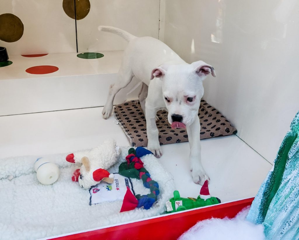 Macy's holiday windows advertise pets for adoption