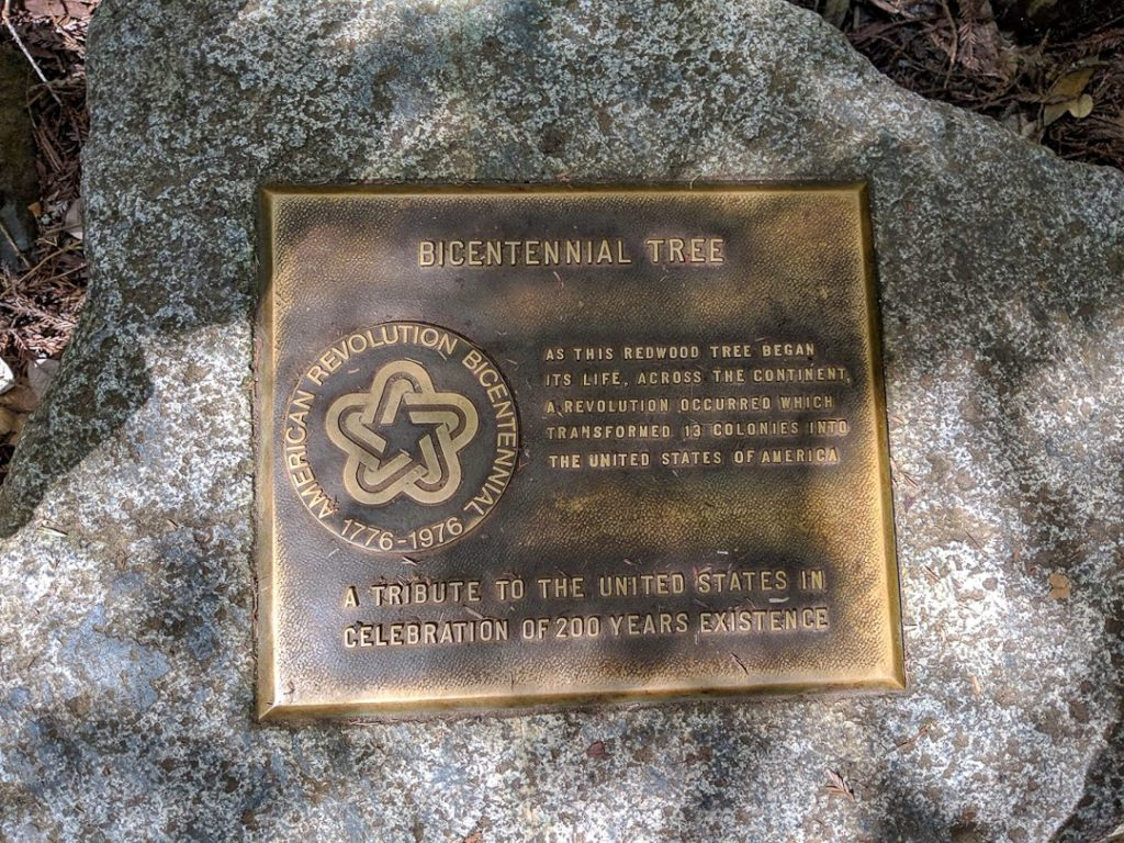 Bicentennial Tree in Muir Woods