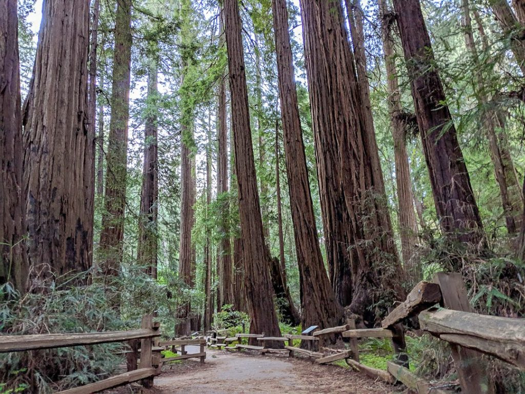 Muir Woods wide trails