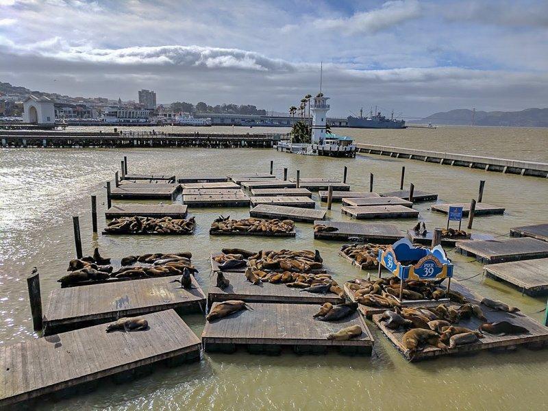 Sea lions at Pier 30 in San Francisco