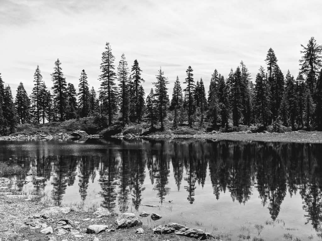 Black and white photograph of Castle Lake Trail scenery