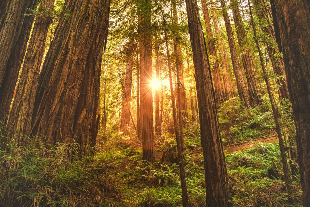 A Giant Redwoods California Guide