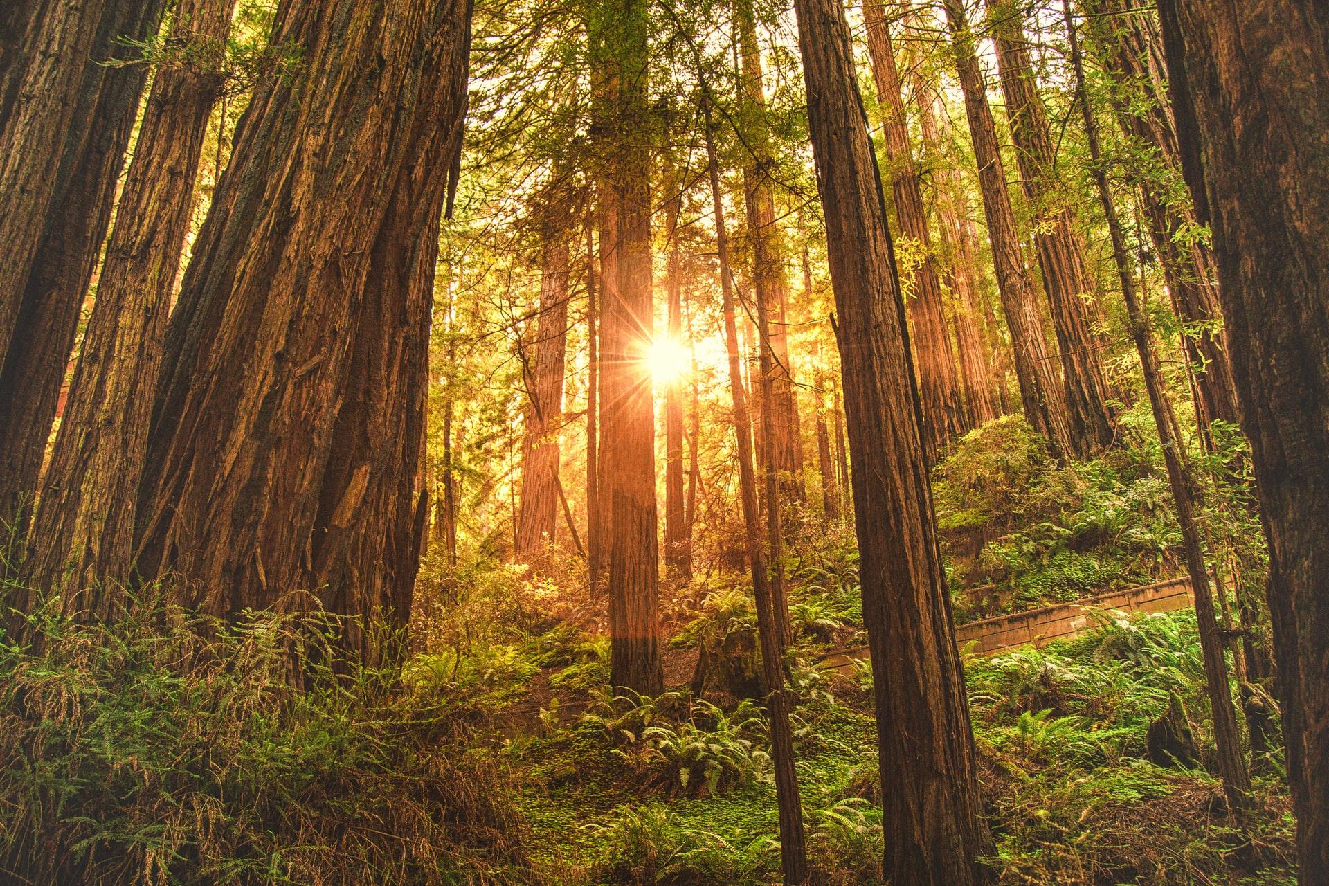 Muir Woods San Francisco