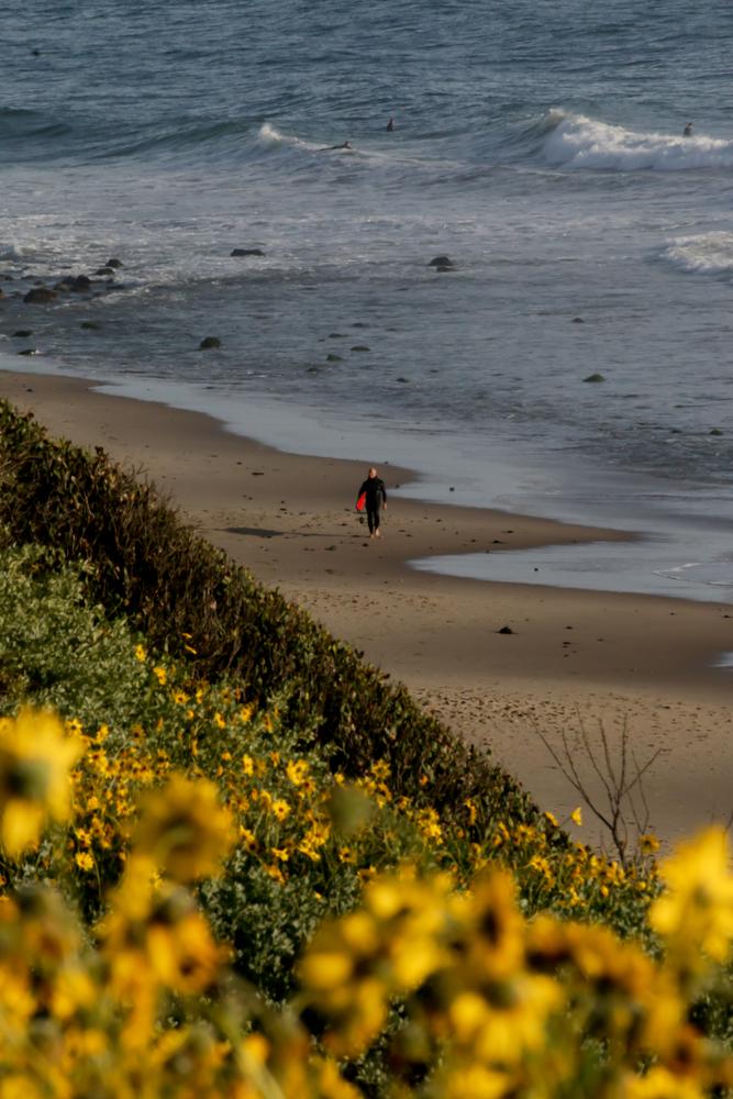 Rincon Beach Santa Barbara