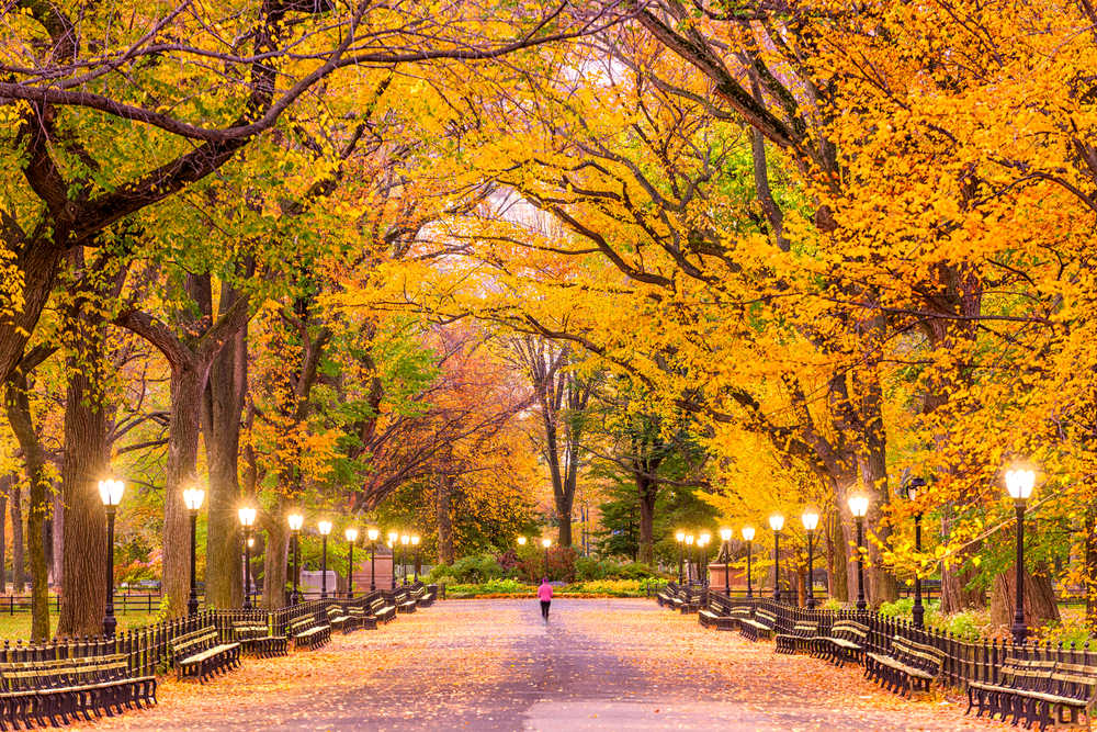 The Mall, in Central Park New York