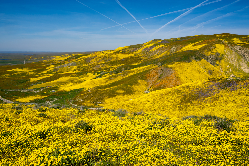 Best places to see Southern California wildflowers