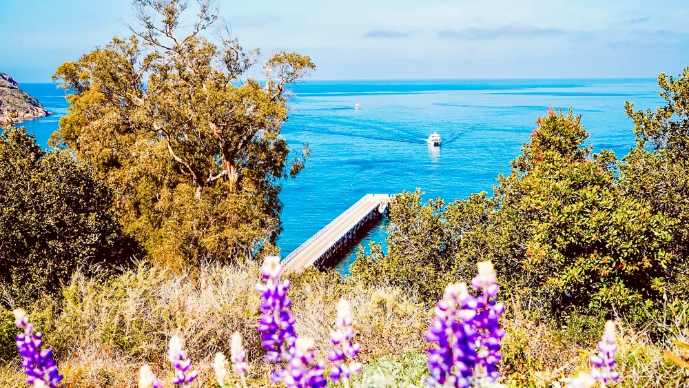 Purple wildflowers overlooking a wooden pier and white boat coming into harbor