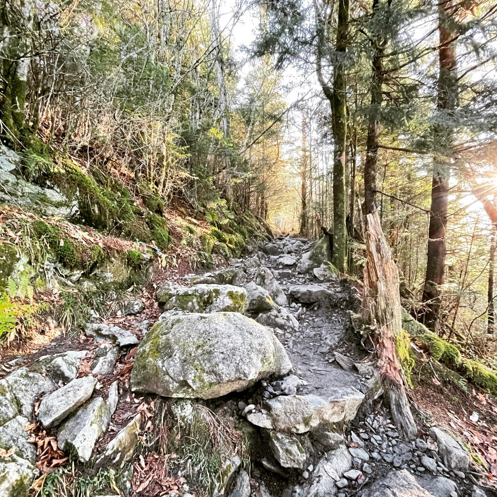 A section of the Appalachian Trail in Great Smoky Mountains National Park