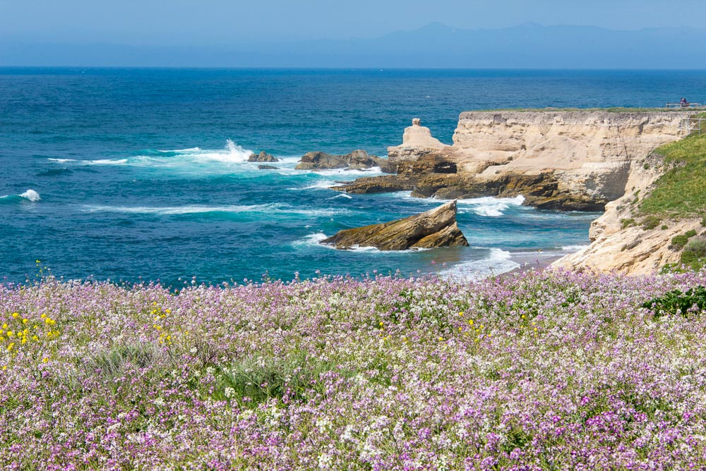 Wildflowers at Point Buchon in California