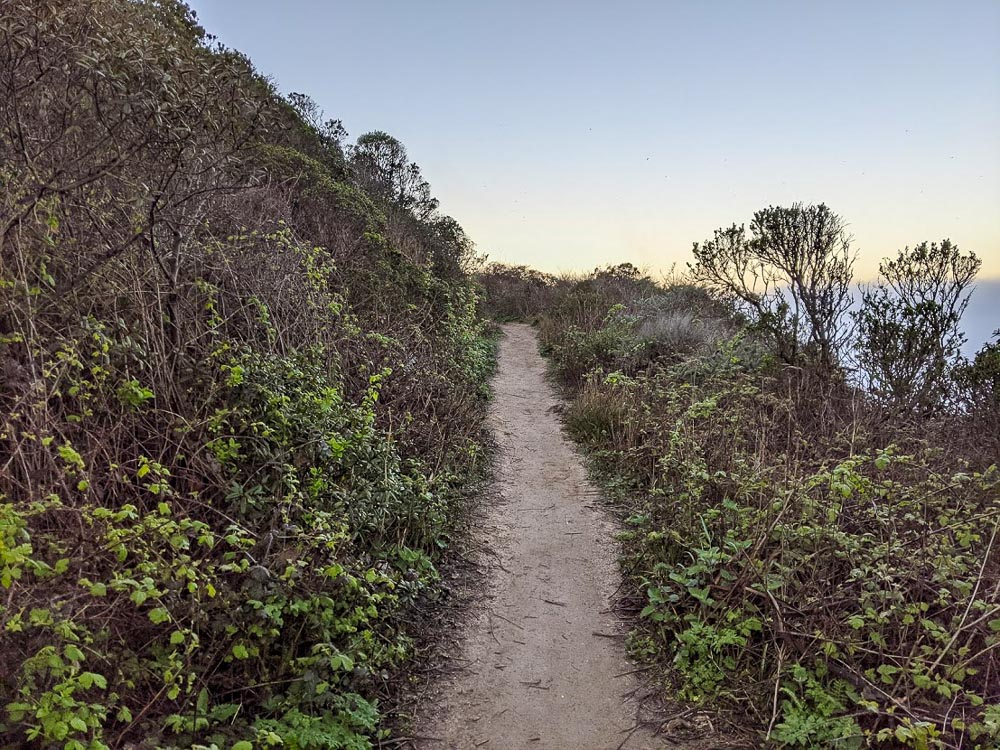 Narrow dirt trail surrounded by shrubs