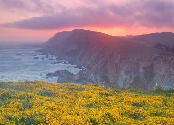 Stunning Spots for Northern California Wildflowers