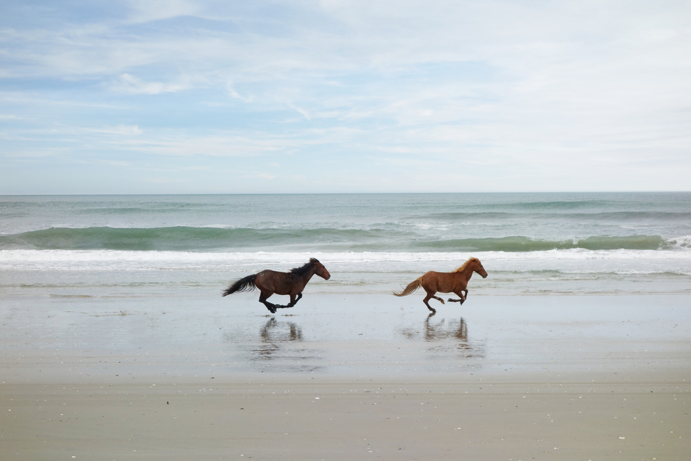 Wild horses running along a beach