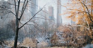 Central Park New York in Winter
